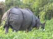 Rhino up close and personal in Nepal